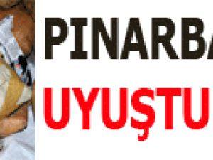 PINARBAŞI'DA UYUŞTURUCU