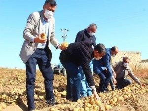Yeşilhisar'da Başkanlar patates hasadı yaptı