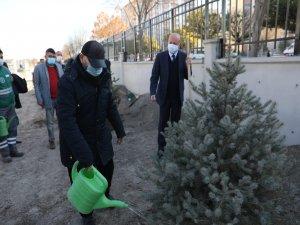 Başkan Çolakbayraktar 24 kasım'da öğretmenlerle  ağaç dikti