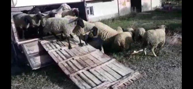 Yahyalı'da 120 küçükbaş hayvanı çalanlar Adana'da yakalandı
