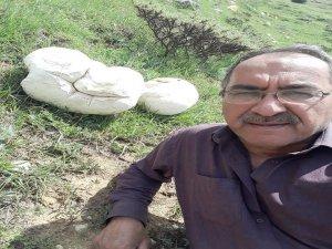 Sarız'da 7 kiloluk dev mantar görenleri şaşırttı