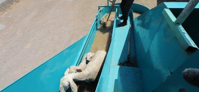 Köy'de yetişmek bir başka? Başkan Yalçın tasarladı mobil araç geziyor koyunlar banyo yapıyor