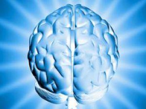 İnsan Beyninin Yapıları Çözülüyor