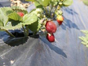 Kayseri'de doğan ürünler bahçesi 31 temmuz'da açılıyor