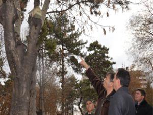 Kocasinan'dan Kuşlara Kış Koruması