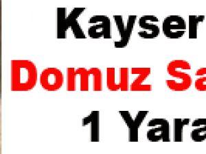Kayseri'de Domuz Saldırısı: 1 Yaralı