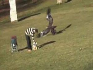 Parkta Aç Kartal Bebeği Çalmaya Kalktı-Video