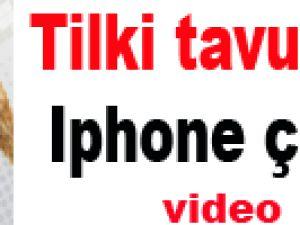Tilki tavuk değil Iphone çaldı