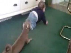 Bebeği taklit eden köpek-video