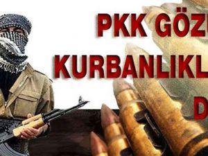 PKK gözünü kurbanlıklara dikti