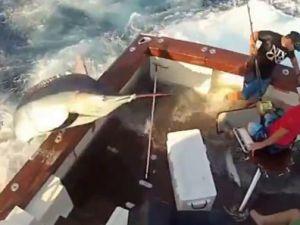 270 kiloluk dev balık tekneye atladı video