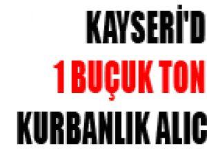KAYSERİ'DE 1 BUÇUK TONLUK KURBANLIK ALICI BEKLİYOR