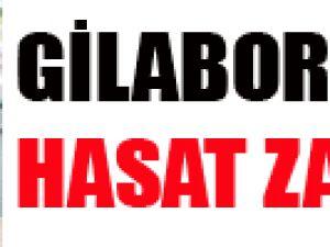 GİLABORU'DA HASAT ZAMANI