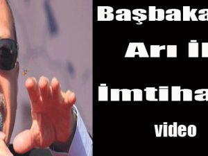 Başbakan'ın arı ile imtihanı! video
