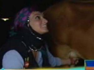 Kahkahayı duyan inek Saba'ya tekmeyi bastı-video