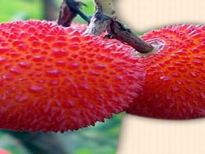 Kanser Ve Romatizma hastalıklarından koruyan meyve