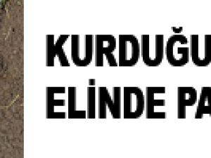 KURDUĞU TUZAK ELİNDE PATLADI