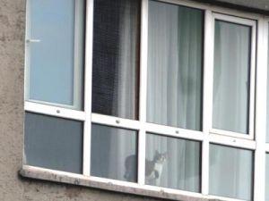 Kayseri'de Köpekle Kedinin Pencere Sefası