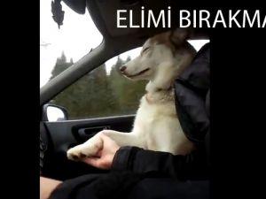Endişeli Köpek Adamın Elini Bırakmıyor - Video