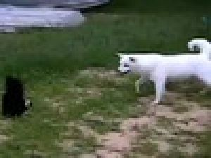 Köpeği Ossuruğuyla Çimlere Serdi / VİDEO