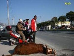 KAYSERİ'DE HAYVANA ÇARPTI SAHİBİNDEN ŞİKAYETÇİ OLDU