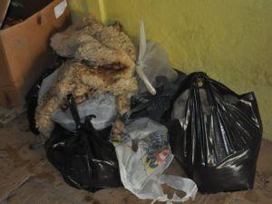 Kayeri'de Kurban Derilerini Çalarken  Yakalandı