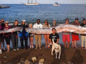 Bu yılan balığı 16 metre uzunluğunda