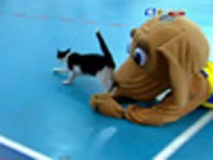 Maskot köpek salonda kedinin peşinde VİDEO