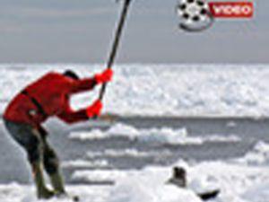 Kanada'da fok katliamı başladı VİDEO