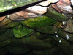 Çanakkale'de yılanlı kuyu şaşkınlığı video