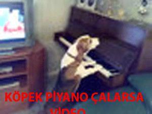 Köpek piyano çalarsa - VİDEO