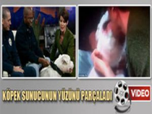 Köpek Yayında Sunucunun Yüzünü Parçaladı/Video