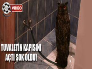 Tuvaletin Kapısını Açtı Baykuş Çıktı VİDEO!