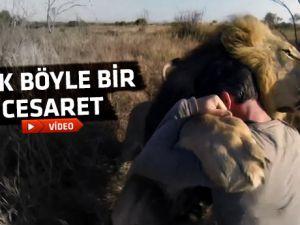 Aslanlarla bu kadar samimi olmak yürek ister-video
