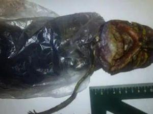 Uzaylı Cesedini Buzdolabında Saklamış