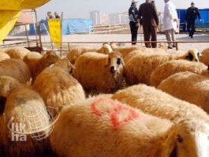Develi'de Kurbanlık İçin Hayvan Pazarları Hareketlendi