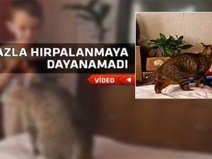 Kedi çilenden çıktı çocuğu parçaladı-video