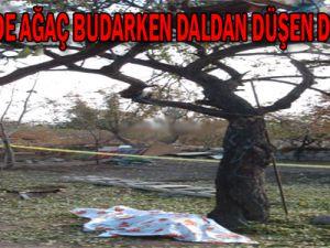 Ağaç Budarken Daldan Düşen Dede Öldü