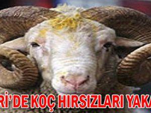 KAYSERİ'DEKİ KOÇ HIRSIZLARI YAKALANDI