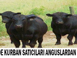 Kayseri'de Kurban Satıcıları Anguslardan Şikayetçi