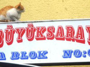 Kayseri'de Sokak Kedisi, Apartmanın Işıklı Tabelasını Sevdi