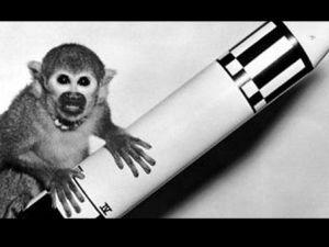 İran'ın uzaya gönderdiği maymun telef oldu