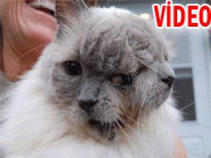 &#39İki yüzlü&#39 kedi görenleri şaşırtıyor - Video