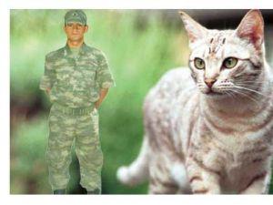 Kışlada Kedi Kayboldu Diye Dayak Yiyen Asker