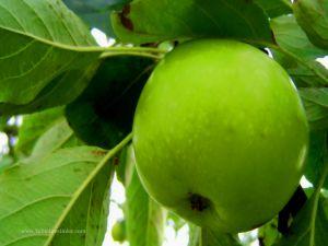 Günde bir elma felçten uzak tutuyor