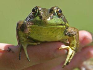 Kayseri&#39de 36 Kasa Kurbağayla Yakalandılar