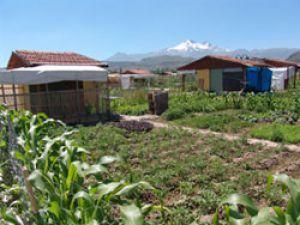 Kayseri&#39de Hobi Bahçeleri Yeni Meyvelerle Tanıştırdı