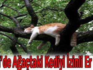 SON DAKİKA Kayseri&#39de Ağaçtaki Korkak Kediyi İzinli Er İndirdi