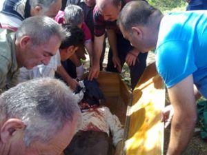 Erzurum&#39da ayı dehşeti: 2 ölü