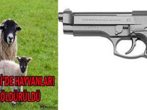 Kayseri Gesi&#39de Hayvanları Otlatırken Öldürüldü
